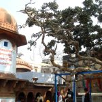 Vrindavan, November – Part 4