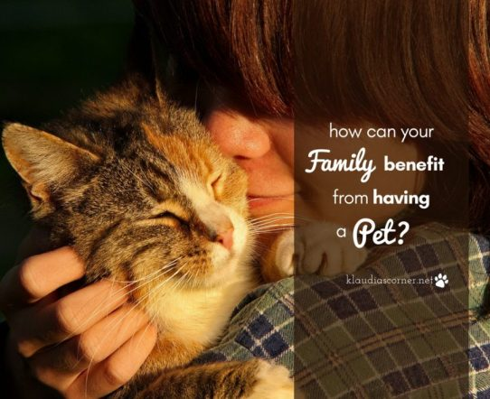 Why you should get a pet - ©klaudiascorner.net