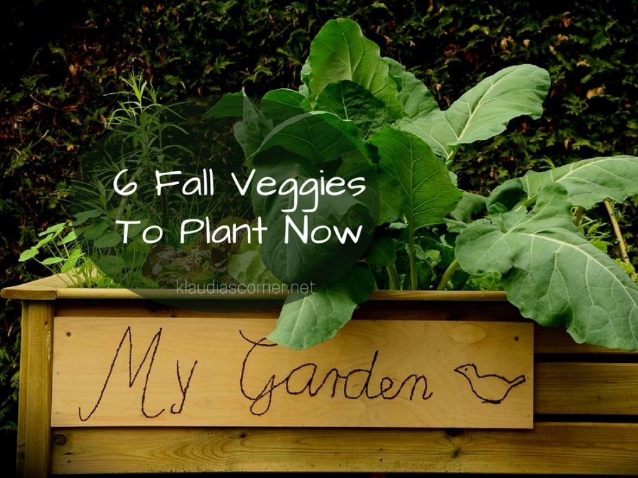 Fall Garden Planting Guide – 6 Fall Veggies to Plant Now