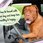 How to Travel With Your Dog And Keep Him Healthy & Happy
