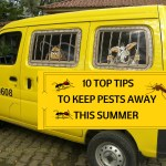 Pest Control Guide – 10 Top Tips To Keep Pests Away This Summer