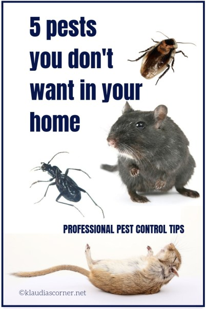 Professional Pest Control Tips - 5 Pests You Don't Want in Your Home