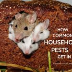 Household Pest Control Tips –  How Common Household Pests Get In