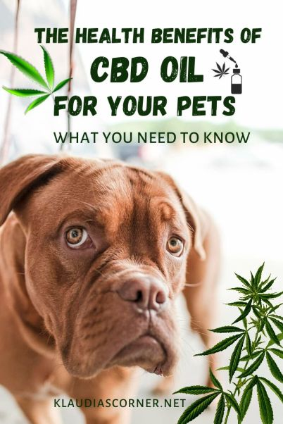 All you need to know about the health benefits of CBD oil for pets - klaudiascorner.net