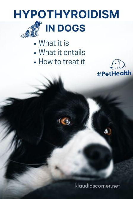 Dog Hypothyroidism - klaudiascorner.net