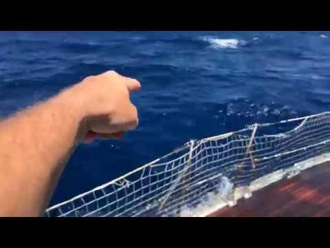 screenshot video delfini 25 kn vento