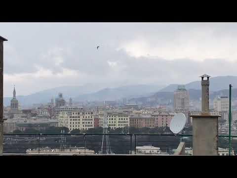 screenshot video nevicata genova