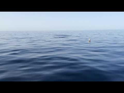 screenshot video delfini che ci vengono a salutare