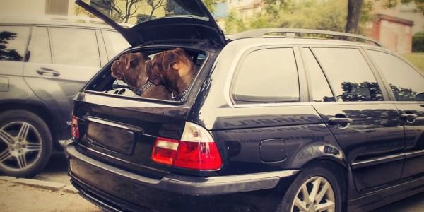 Tiere im Auto: Transportbox ist beste Wahl
