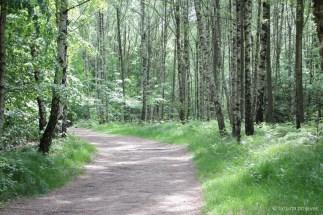 Weg zwischen lichten Frühlingsbirken