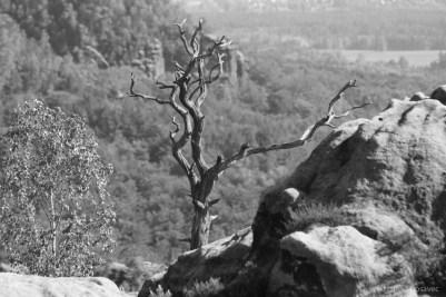Alter Baum schön malerisch auf einem Felsen