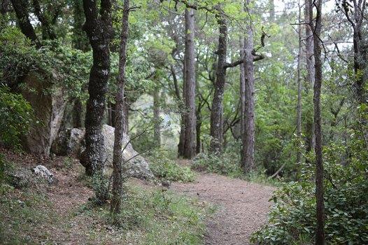 Lichter Bergwald