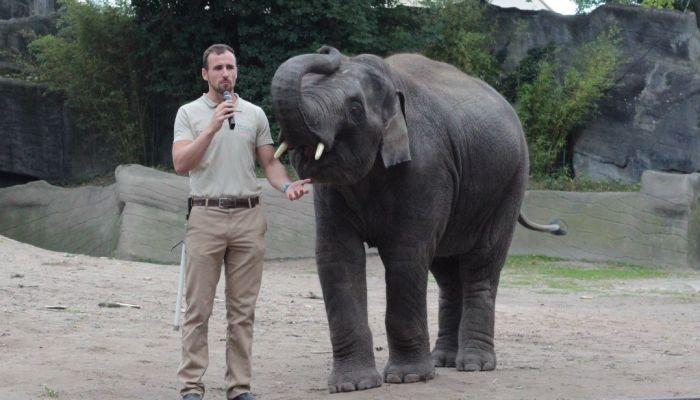 Elefant mit Pfleger