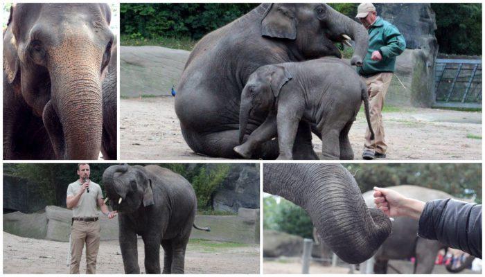 So tolle Tiere! Hagenbeck Elefanten