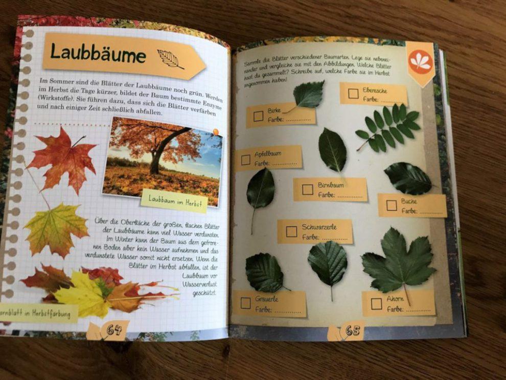 Laubbäume aus das Naturforscher Buch