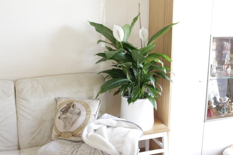 Sofa und Zimmerpflanze Einblatt