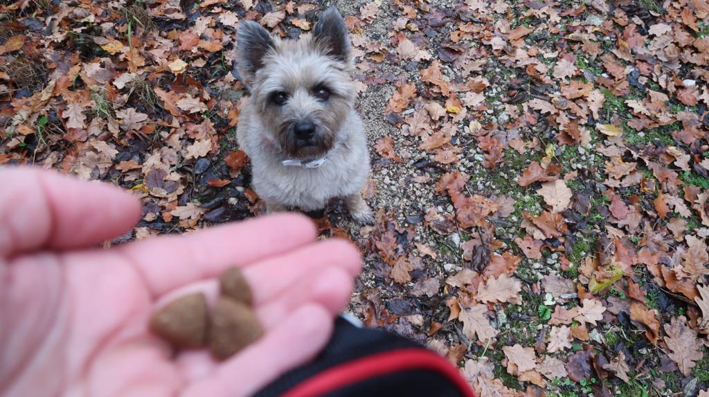 Hund wartet auf Belohnung