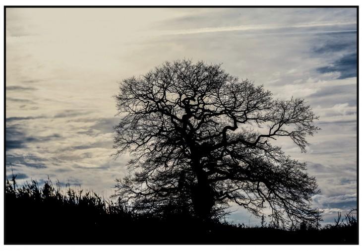 So prägnant hat Fotograf Joachim Schäfer sein Werk betitelt: Eiche Schanz. Die Eiche ist der Baum der Deutschen, und Schenkenschanz ist ein Eichendorff.
