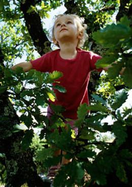 075 - ronib puu otsa