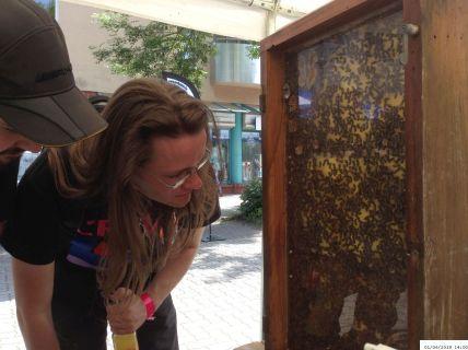 Bienen in einem wohltemperierten / Schaukasten Imkerverein Hamm beim Event UNITED, 01.06.2019 (C) Ulrich Mandel