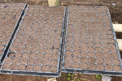 Pembibitan, Persemaian, Seedling Farm, Cabe, Tomat, Melon, Semangka, Praktis, Nampan Semai, Bak Semai, Kotak semai, Pertanian, Budidaya, Hortikultura