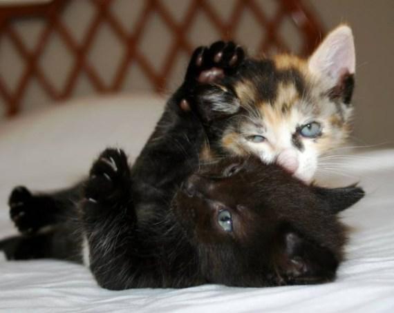 Imagenes gatos jugando