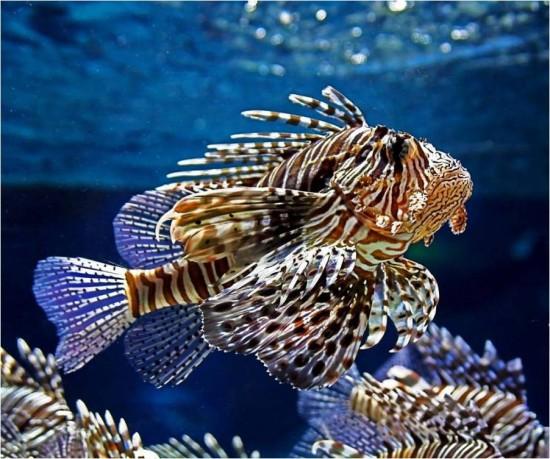 fotografias peces