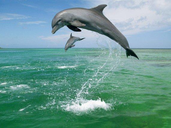 Fotografia delfines saltando sobre el mar