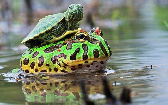 Fotografia - imagen sapo y tortuga
