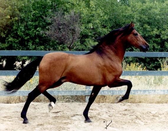 Fotoggrafia caballo