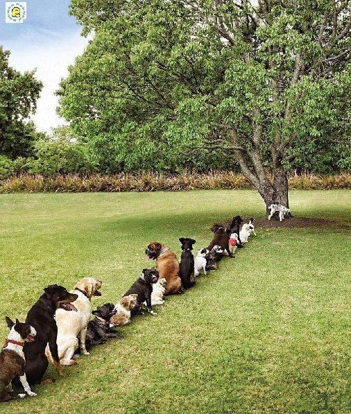 Perros haciendo fila para ir al baño