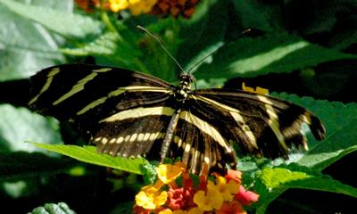 Fotografia de mariposa de diseño raro