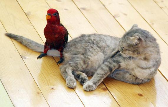 imagen divertida de pajaro y gato