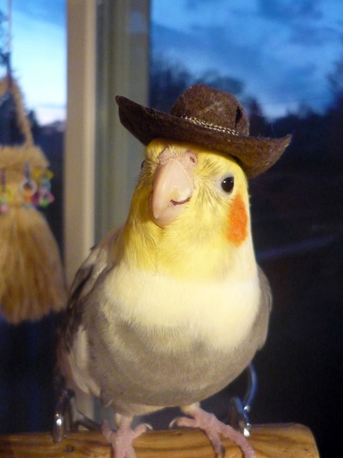 Fotos locas: pajaro con sombrero