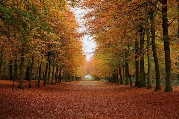 wallpaper bosque