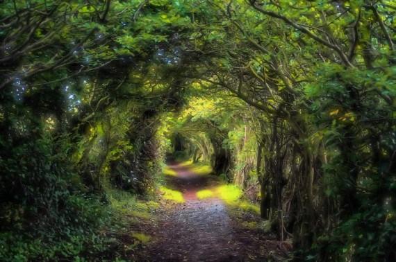 fotografia tunel de arboles