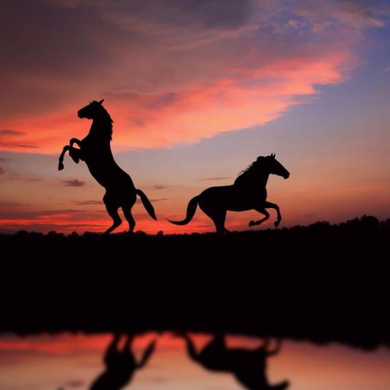 Hermosa fotografia de dos caballos al atardecer
