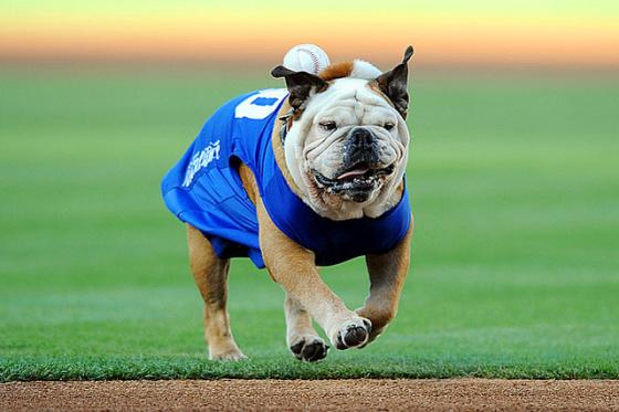 Fotografia de perro corriendo