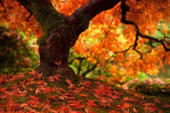 Wallpaper arbol otoñal