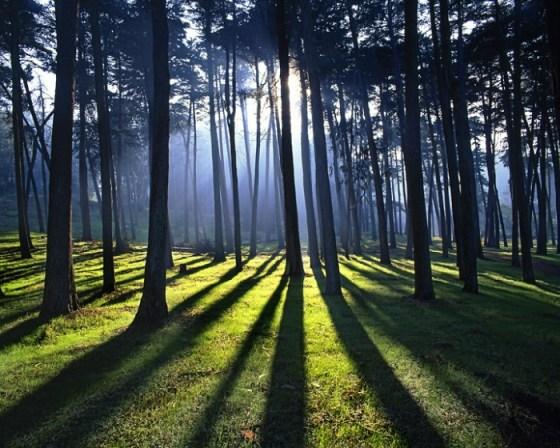 fotografias de bosques al amanecer