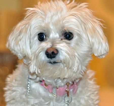 imagen tierna de perro blanco