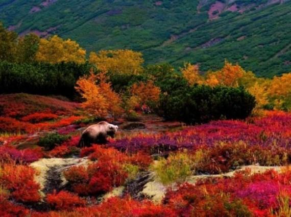 Fotografia de oso en pradera florida
