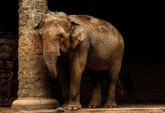 imagenes fotografias de elefantes