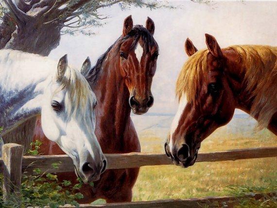 Hermosa imagen de tres caballos