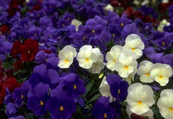 imajenes de flores