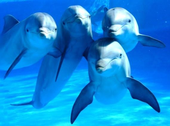 Fotografia de cuatro delfines bajo el agua