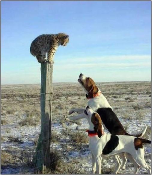 """Fotos locas: """"Gato v/s Perros"""""""