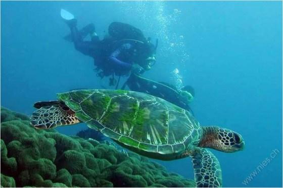 Imagenes de mundo marino: Tortuga marina bajo el mar
