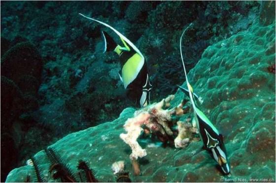fotografias de peces en el mar