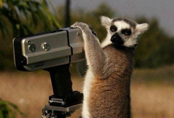 Imagen divertida de animalito fotografo